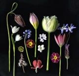Botanical delight 1 by bronwen coe, Photography