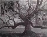 Language of trees 5 by bronwen coe, Artist Print
