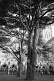 Salisbury: cedars in the Cloisters by bronwen coe, Photography