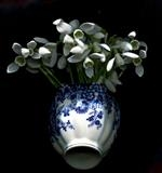 Still life with snowdrops by bronwen coe, Photography
