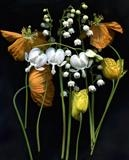 Welsh Poppies and Lily of the Valley by bronwen coe, Photography